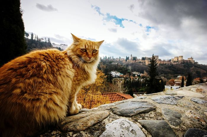 """That's Alhambra. Now pet me!"" Adventure Buddies Cats Of EyeEm Beautiful Animals  Caturday"