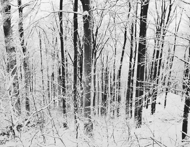 Black and white forest under the snow at Hungary 2017 January BLACK AND WHITE WINTER SCENE January 2017 Snow ❄ Winter Winter Woods Winterscapes Wintertime Beauty In Nature Black And White Black And White Photography Black And White Winter Branch Cold Temperature Forest Nature No People Outdoors Snow Snowcapped Trees Tree Winter Winter 2017 Winter Forest Winter Is Here Winter Wonderland