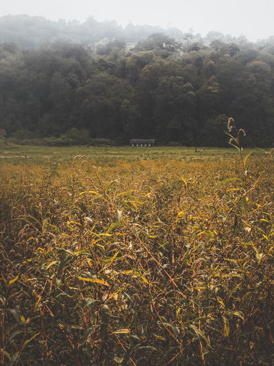 Scenic view of field against trees