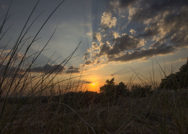 Grassy Sunset - sunset at the end of a nice warm summerday. The sun light still glimpses through the clouds Cloud Beauty In Nature Cloud - Sky Grass Land Landscape Nature Plant Sky Sun Sunlight Sunset Timothy Grass