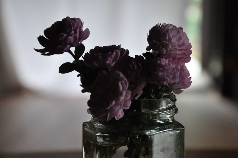 Close-up of purple roses in vase on table