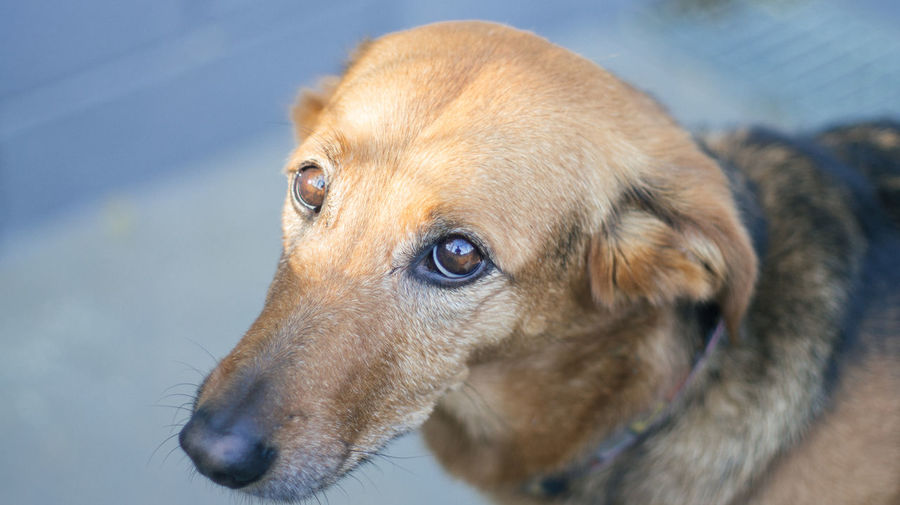 Dog portaits Animal Animal Themes Close-up Day Dog Dog Eye Dog Portarait Dogs Domestic Animals Eyes Look No People One Animal Pets Portrait