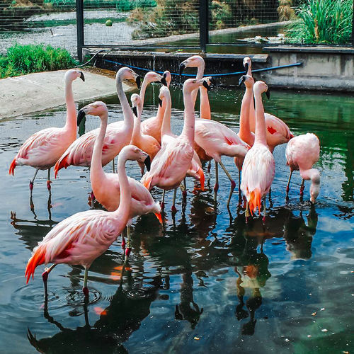 Flamingo Animals In The Wild Bird Animal Wildlife Water Animal Themes Pink Color Large Group Of Animals Outdoors Nature Day No People Lake Full Length Beauty In Nature Capture Moments Portrait Photography Shot Colores Intensos Full Frame Shot Photoshoot Photoshop Edit Photographer Santiago De Chile Paisajes Urbanos