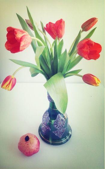 цветы#красные#тюльпаны цветы Flowers