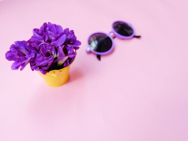 edible butterfly pea and natural dye Herb Violet Natural Color Dye Edible  Purple Buterfly Pea Flower Flowering Plant Purple Freshness Plant Indoors  Pink Color Beauty In Nature Copy Space Flower Head