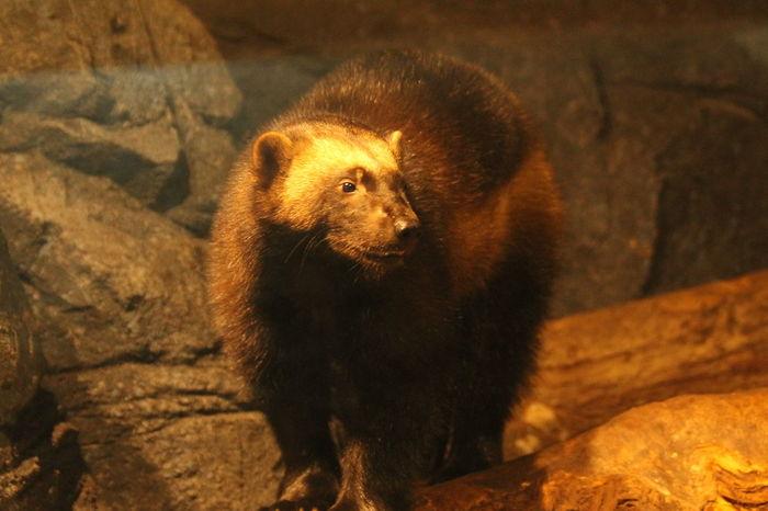 Singapore Singapore Zoological Garden Singapore Zoo Wildlife Photography Zoo Animal Animal Wildlife Mammal Raccoon Dog SingaporeZoo Wildlife Wildlife Reserves Singapore Wildlifephotography Zoo Animals  Zoophotography