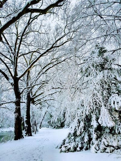 Let it snow, let it snow, let it snow ❄❄❄ Winter Wonderland Wintertime EyeEm Nature Lover EyeEmNewHere Nature Winter Park Enjoying Life Enjoying The View Snow Winter Cold Temperature Beauty In Nature Tree Tranquility Outdoors No People Day Scenics Shades Of Winter