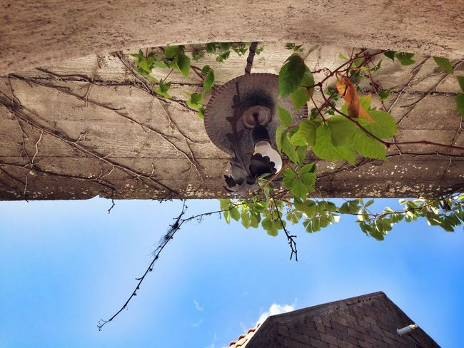 Cesarò-nebrodi Sky Sky And Clouds Garden Garden Photography Low Angle View Branch Day Outdoors Window Arch Architecture Architecture_collection Plant Plants Plants And Flowers No People Light Geometric Shape Low Angle View Looking Into The Future Looking Up Surprise
