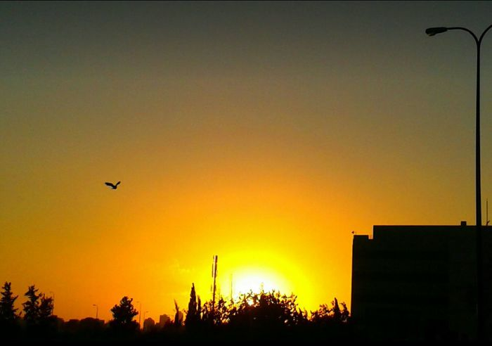 Connected With Nature today on my Color Palette it's Orange Color Sunset Silhouette Flyingbirds Essence Of Summer Hot Summer Day Colour Of Life Motion Capture How's The Weather Today? Looking Up Can Be So Rewarding Driving Home Burning Sky