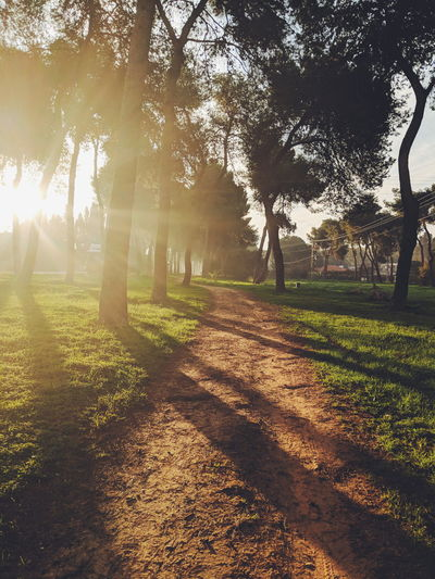 Beauty In Nature Day Environment Grass Growth Land Landscape Lens Flare Nature No People Outdoors Park Plant Shadow Sky Sun Sunlight Tranquil Scene Tranquility Tree Trunk