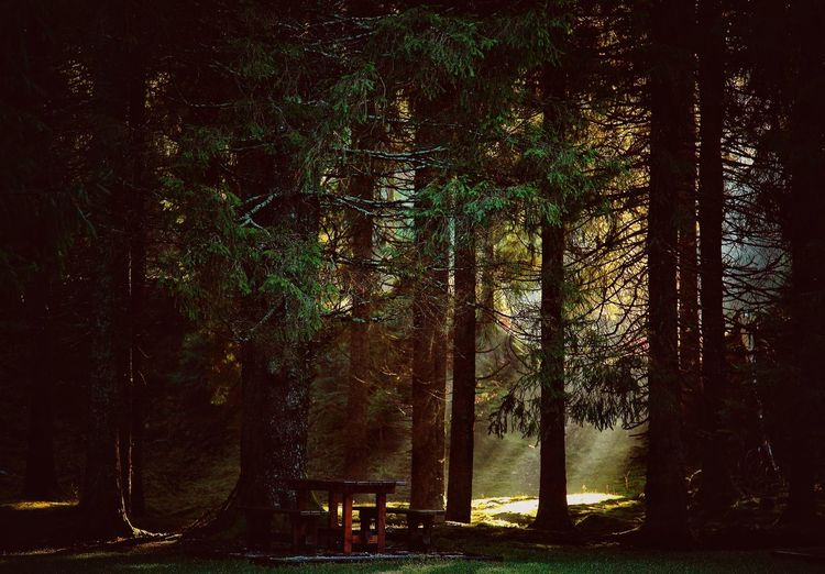 Sun Shadow Shadows & Lights Tree Forest Sky Tree Trunk Streaming Tranquil Scene Woods Calm