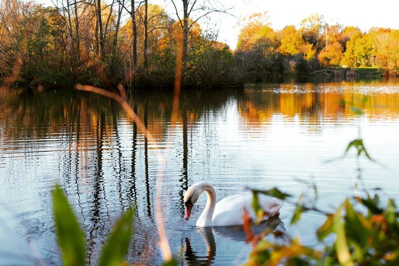 Animals In The Wild Beauty In Nature Reflection Water Lake Nature Outdoors Autumn Capture The Moment Outside Photography Landscape Skyoverberlin Berlinsky Canon Canonshot Canonphotography Berlin Naturelovers Outdoor Pictures Nature Tree Landscape Nature Wanderlust Nature Weather