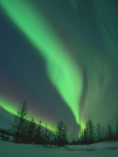 Aurora arctic