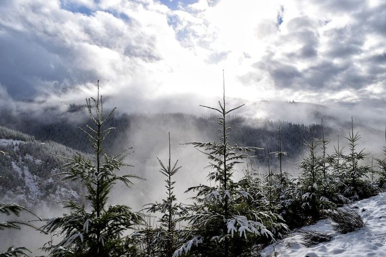 Tree Nature Sky Cloud - Sky Beauty In Nature Weather Snow Winter No People Scenics Outdoors Tranquility Cold Temperature Growth Day Bare Tree Branch Tranquil Scene Snow Covered Cloud Trees Forest Mountain Range Renewable Energy Landscape