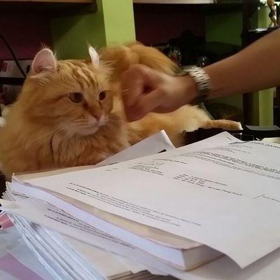 Slow mo punch #curly #kinkalow #cats #instacats edinamzz