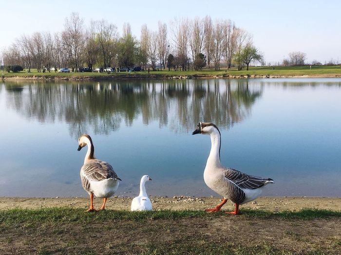 Oche Lago Nature Water Animals