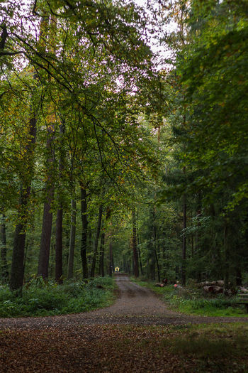 Beauty In Nature Day Forest Nature No People Outdoors Road Scenics Tree