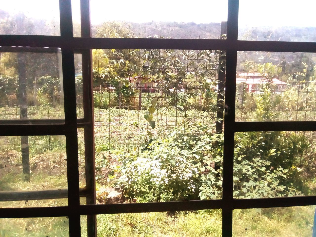 window, tree, indoors, nature, no people, day, growth, looking through window, sunlight, beauty in nature, scenics, security bar, sky, greenhouse, close-up