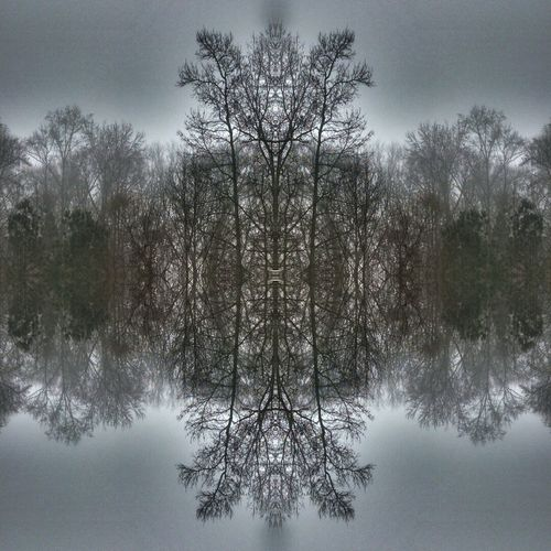Reflections of life. Reflections Trees Mirrored Edited Branch Branches Tree Reflection Reflectioned Symetrical