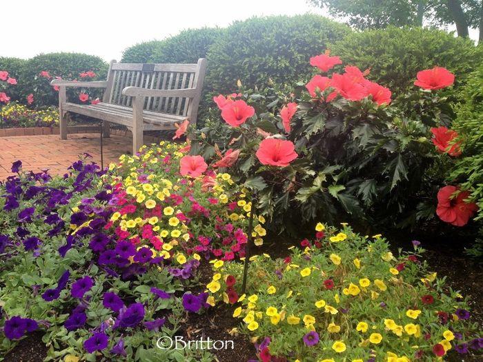 Flowerporn Beautiful Garden