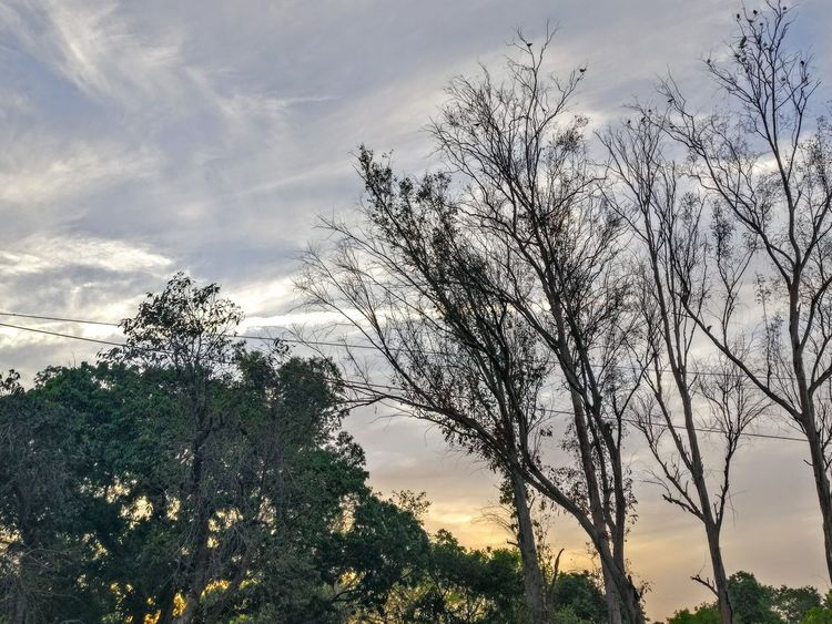 Tree Sky Cloud - Sky Nature Silhouette Low Angle View Beauty In Nature Outdoors No People Day Bird PhonePhotography Oneplus5 Beauty In Nature Shotononeplus5 Plant Close-up Freshness Nature DelhiDairies