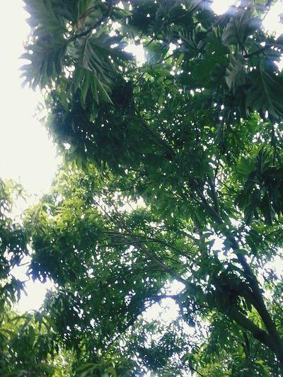 Natures Shade