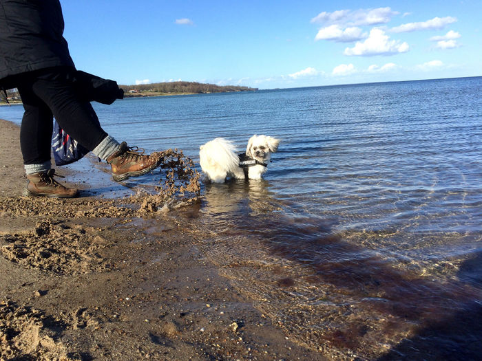 Low section of woman kicking sand by dog on shore at beach