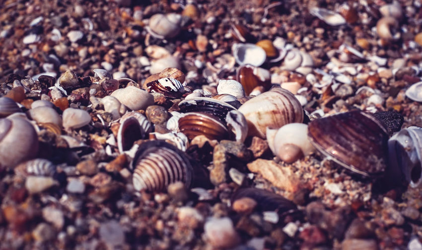 Sea shells on the beach Abundance Backgrounds Beauty In Nature Close-up Day Nature No People Outdoors Selective Focus