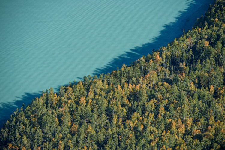 High angle view of trees by sea