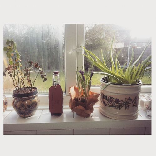 Sunny day in Manchester Pancakeday Plants Home Lovely Igersoftheday Window Friends Breakfast Sunny Spring GIN Raspberry Flowers Windowseal Garden Tflers Picoftheday Relax Nature England Wakeup Goodday Goodmorning Sunshine