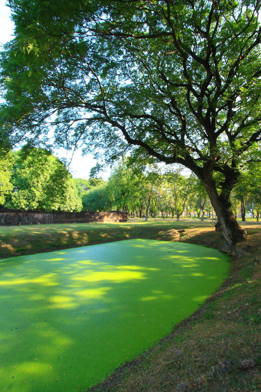 tree, nature, beauty in nature, grass, green color, tranquility, scenics, tranquil scene, day, no people, outdoors, growth, water, sunlight, golf course, green - golf course, golf, landscape, sky