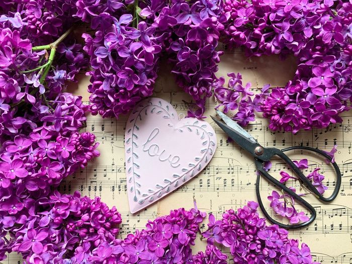 💗💜💓 Spring Flowers Violet Flowers Violet Flower Head Flower Flowers Flat Lay Lilac Flower Lilac Cute Sweet Love Heart Shape Heart Pink Flower Pink Pink Color Scissors Flower Flowering Plant Plant Beauty In Nature Pink Color Nature Still Life Purple Freshness Springtime Paper Blossom