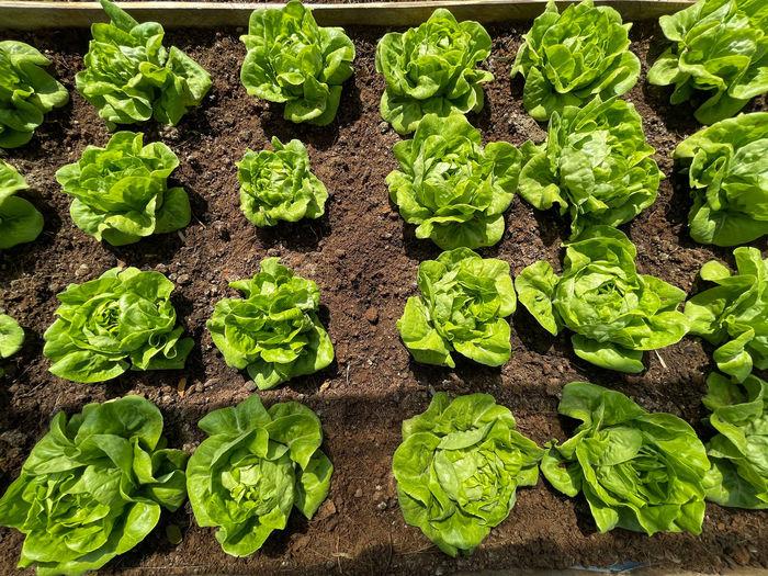 Full frame shot of vegetables on field