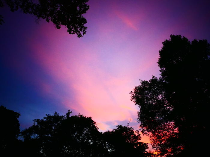 ASIA Cambodia South East Asia Travel Angkor Beauty In Nature Day Growth Low Angle View Multi Colored Nature No People Outdoors Phnom Bakheng Purple Scenics Siemreap Silhouette Sky Sunset Tranquil Scene Tranquility Tree Perspectives On Nature
