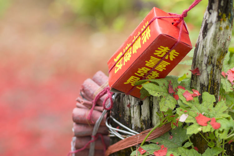 Chinese New Year Close-up Communication Day Flag Focus On Foreground Hanging Leaf Low Angle View Metal Multi Colored Nature No People Outdoors Plant Protection Red Safety Selective Focus Text Yellow