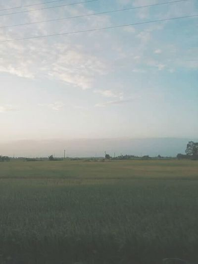 Vietnam Baclieu Agriculture Rural Scene Field Airport Sky Grass Landscape Cloud - Sky