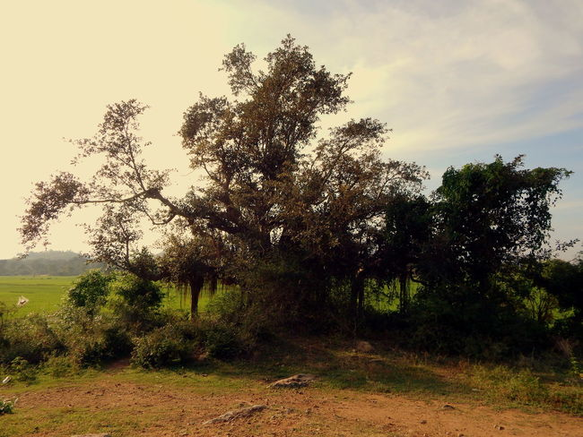 An only tree in a farm Tree Nature No People Growth Sunrise Outdoors Day Beauty In Nature Warm Light Lost Places Roadtrip The Great Outdoors - 2017 EyeEm Awards