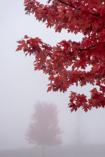 Low angle view of autumn tree against sky