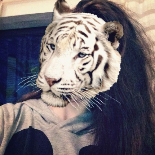 This is me... But with a tiger head.