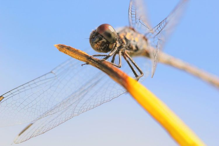 Close-up of insect against blue sky