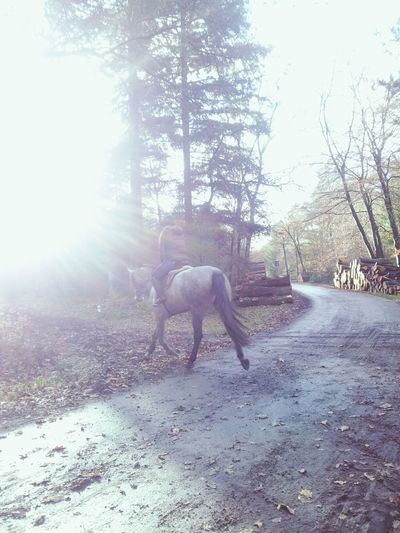 In The Forest A Walk In The Woods Horseriding Sunshine
