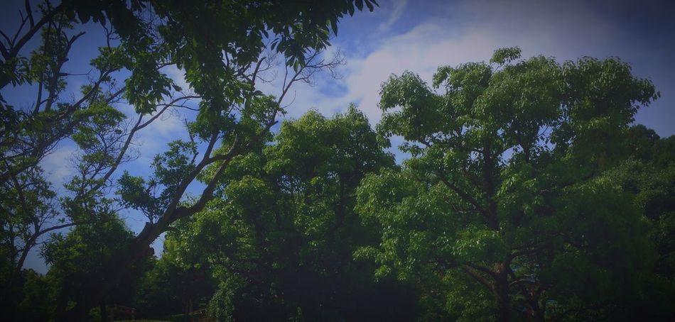 Coffee Funky Work 童 土 縁 音 生命 身体 心 脳 影 光 Enjoying The Sun Hello World Life's Journey  My Work Enjoying Life Light And Shadow Enjoying Nature EyeEm Best Shots - Nature One Love Smoking Tuning Tree Green 今朝、期待のホープ君の顔に《心ここに在らず》と書いてあった気がしてね。ちょっと付き合ってくれっつって、仕事もしねーで山遊び。
