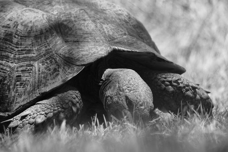 Tortoise 02