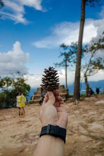 Phu Kradueng National Park Nature Plant Outdoors Kradueng Phuket Park National Park Nature Thailand Loei Pine Tree Otange Lanscape Tree Green Macro Macro Photography Sunshine Maple Travel Destinations