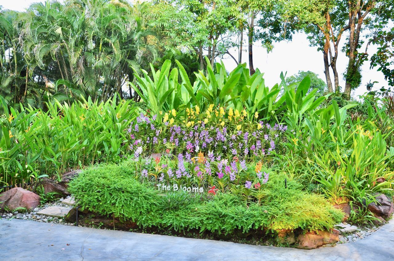 plant, growth, flower, beauty in nature, flowering plant, green color, nature, tree, day, freshness, no people, water, tranquility, garden, park, vulnerability, grass, park - man made space, outdoors, purple, flowerbed, garden path