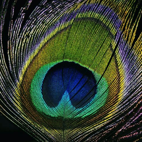 Pattern Peacock Feather Green Color Backgrounds Nature Peakock Bird Photography Feathers Of A Bird