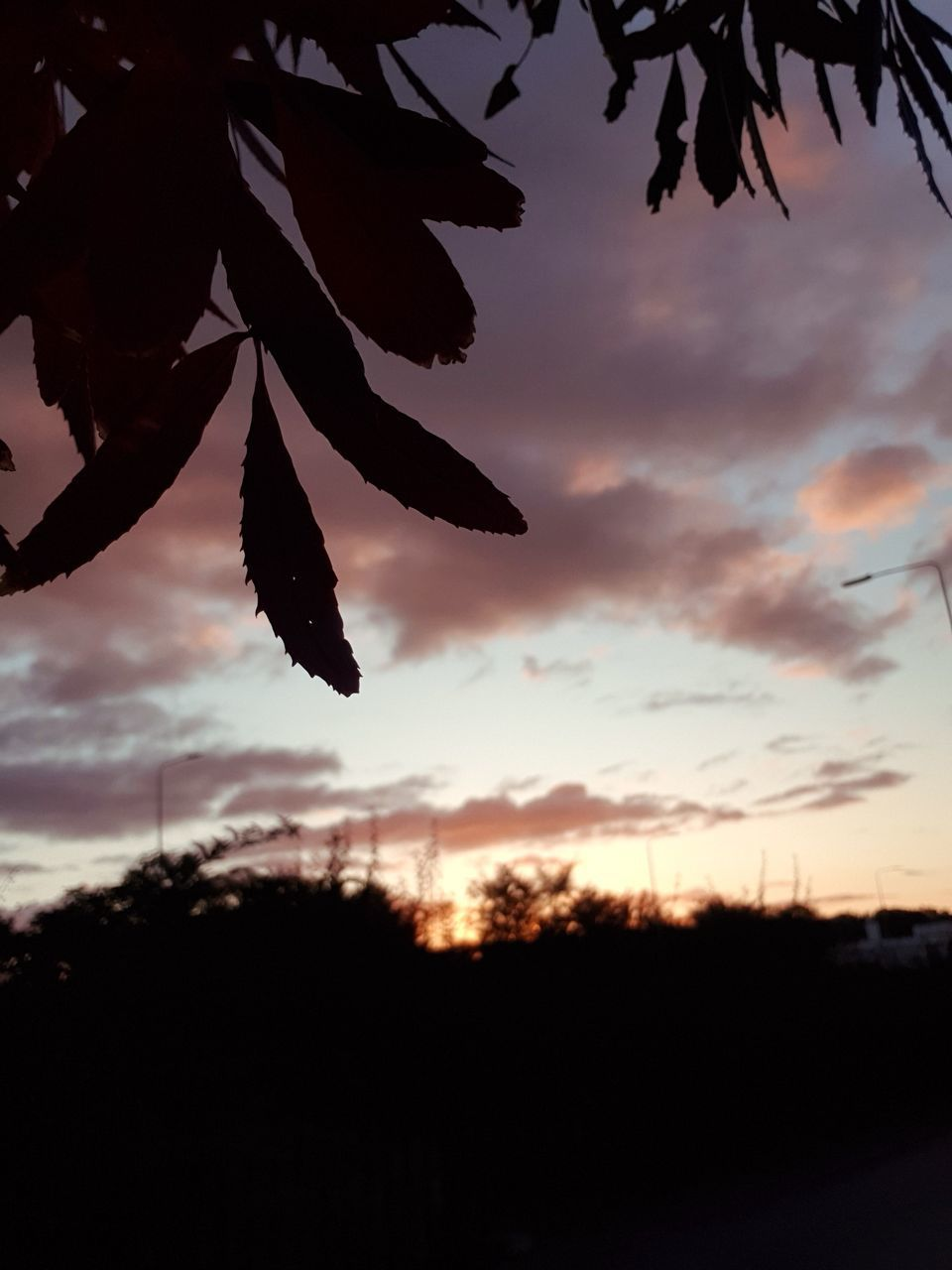 CLOSE-UP OF SILHOUETTE MAPLE LEAVES AGAINST SKY DURING SUNSET