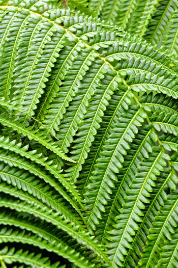 Green Green Color Beauty In Nature Cannabis Plant Close-up Day Fern Foliage Fragility Freshness Frond Green Color Growth Herb Leaf Leaves Nature No People Outdoors Plant