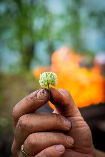 Fire Flame Flower Head Flower In Hand Focus On Foreground Lovely Day Nature_collection Naturelovers Outdoors