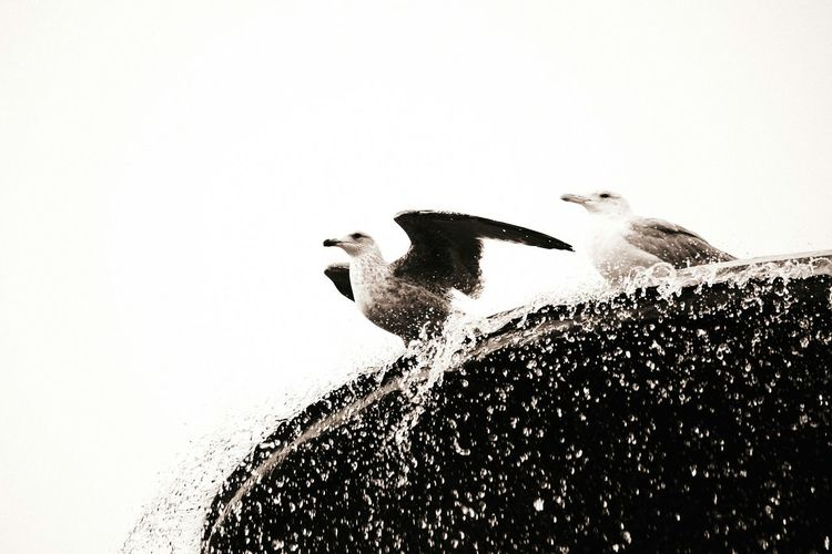 Seagulls Awwwwww!!!!!!!!  Beautiful Animals  Nature_ Collection  EyeEm Nature Lover EyeEm Best ShotsSweet Sweden